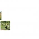 presentatie groenactiviteitenterrein-page-011