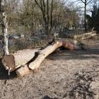 bomenkap_opstand_4