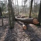 bomenkap_opstand_6