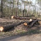 bomenkap_opstand_7