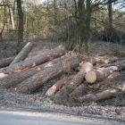 bomenkap_opstand_9