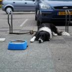 hond_moesel_0000