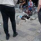 hond_moesel_0001