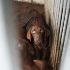 honden_verwaarlozing_Maarheeze_0013