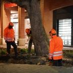 bomen_nieuwe_markt_0010