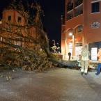 bomen_nieuwe_markt_0011