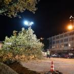 bomen_nieuwe_markt_0014