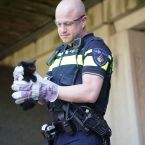 kitten_viaduct_maarheeze_0013