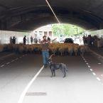 schapen_0004