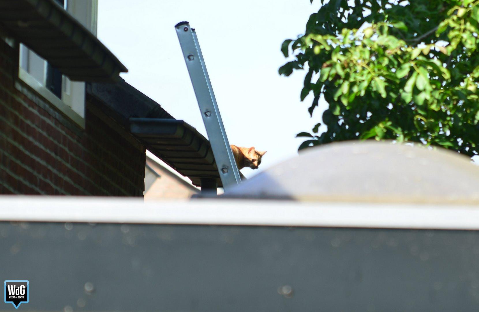 Brandweer haalt kat van dak in Ospel