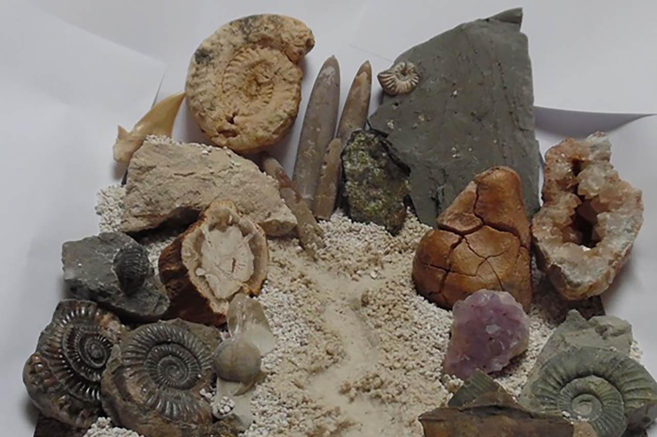 Stenen en Fossielen zoekmiddag in Weert