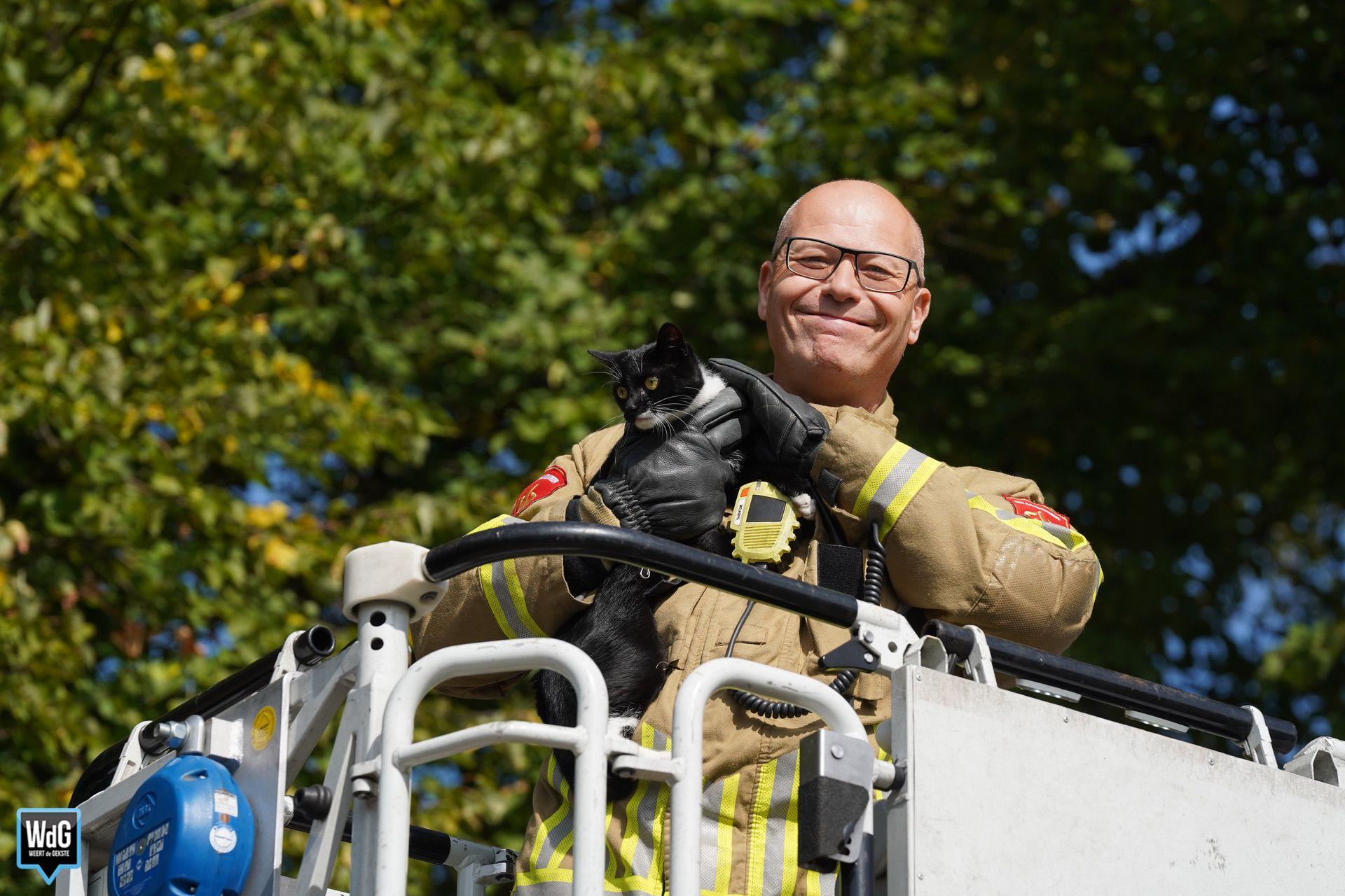 Brandweer redt poes uit de boom